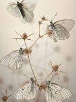 White Butterfl...