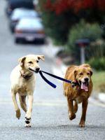Running Dogs