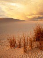 Desert Shine