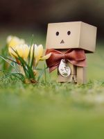 Danbo with flowers