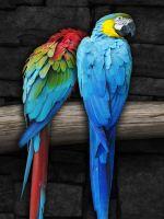 Parrots pair