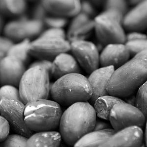 Random Wallpapers Black And White Peanut Samsung Galaxy S  High Resolution Wallpapers Widescreen