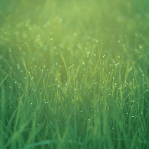 Dew Drops On Grass Photography Mobile Wallpaper     X
