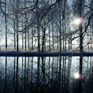Galaxy S  Active Wallpapaper Woodland Lake Landscape
