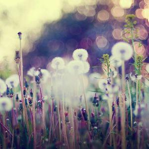 HD Galaxy S  Background Flower