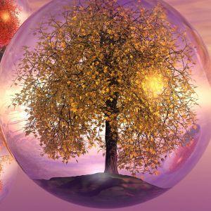 Galaxy S  Wallpaper Hd Nature Tree Bubble