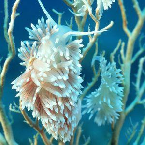 Galaxy S  Wallpaper Hd Nature Sea