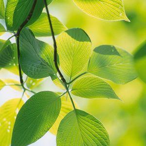 Galaxy S  Wallpaper Hd Nature Green Leaf