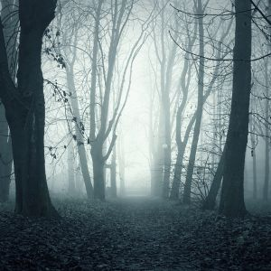 Dark Foggy Woods Nature Mobile Wallpaper     X