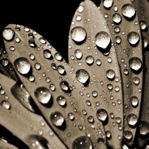 Galaxy S  Wallpaper Hd Nature Flower Water Drop