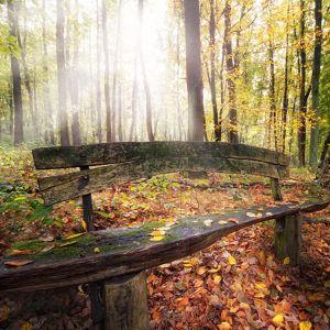 Galaxy S  Wallpaper Hd Nature Forest Seat Sunlight