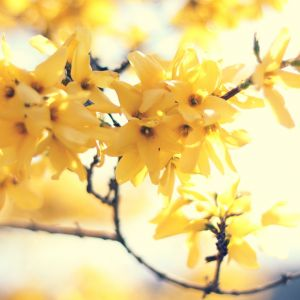 Yellow Spring Galaxy S  Wallpapers