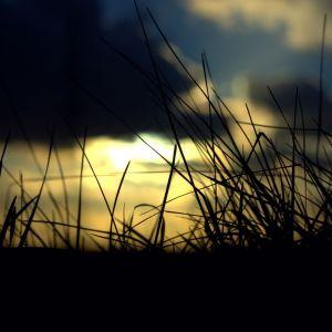 Sunset Grass Wallpaper