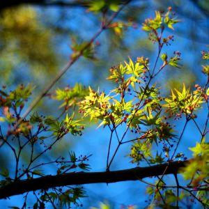 Galaxy S  Wallpaper HD Seasons Spring Leaves And Berries