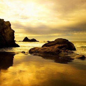 Golden Beach Background     X