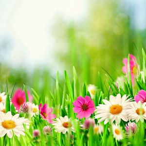 Spring Meadow HD HD Samsung Galaxy S  Wallpapers Free Download