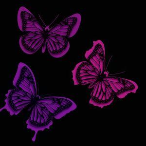 Butterflies Desktop Background