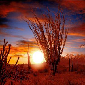 Sunsetland Z G E GV