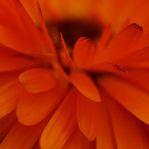Orange Flower Wallpapers For The Iphone