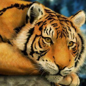 My Galaxy S  Wallpaper HD Animals
