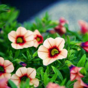 Nice Flower Bokeh Wallpaper