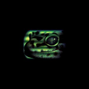 Lopard Gecko Animal Mobile Wallpaper     X