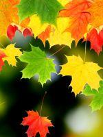 Various Autumn Wide