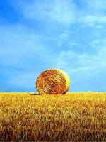 Z Wallpaper Full Hd      X      Smartphone Bale Of Hay