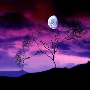 Dark Moon Purple Sky Hd Wallpaper Hd Nature Photo Moon Hd Wallpaper