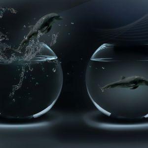D Fantastic Dolphins D Desktop     X     Free Wallpaper