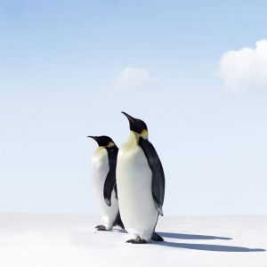 Penguin In Snow Wallpaper
