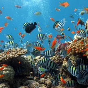 Aquarium     X