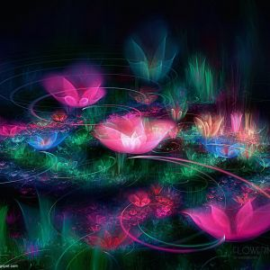 HD D Flowers  Www WallpaperMotion Com