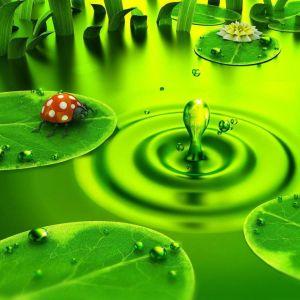 D Green Nature
