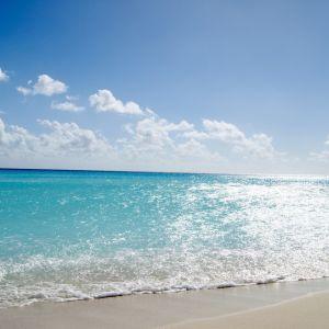 Ocean Wave     X