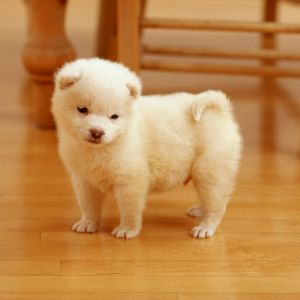 Cutest Puppy     X
