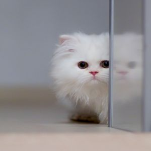 Amazing Cat Face Image