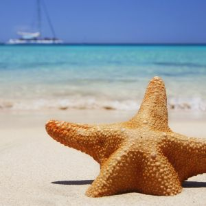 My Sony Xperia Z HD Summer Starfish Beach  Wallpapers IPad Retina