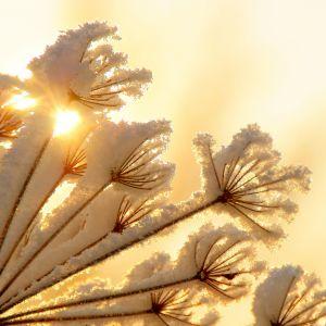 Winter Sunshine Galaxy S  Wallpapers