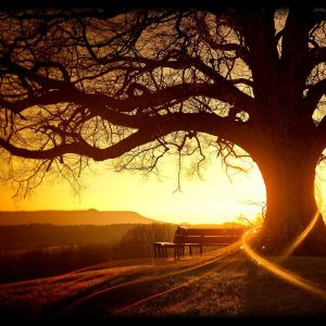 Wonderful Trees Sunset Landscape Wallpaper For Samsung Galaxy S