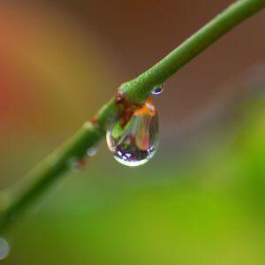Branch Water Drop Wallpaper