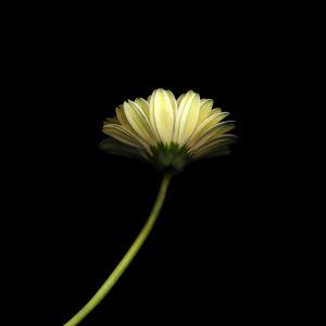 Papers Co Mk   Lonely Flower Dark Simple Minimal Nature    Wallpaper