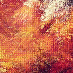 Papers Co Va   September Pattern    Wallpaper