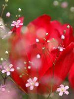 X     Beautiful Roses Wallpaper
