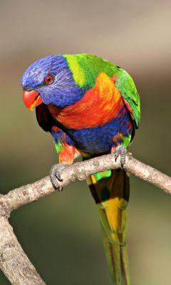Most Beautiful Bird Wallpaper Hd     X