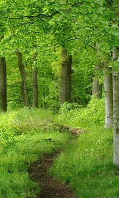 Beautiful Forest Trail Landscape Free Wallpaper For LG G  Smartphone