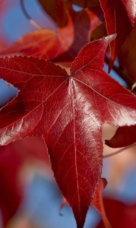 Leaves Beautiful Dark Sky Form Branch           X