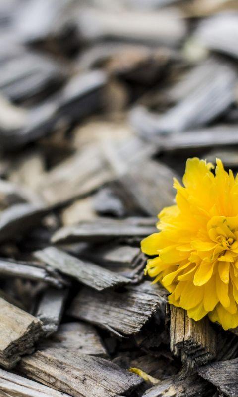 Beautiful Yellow Flowers Wood Top Uhd  K Wallpapers     X