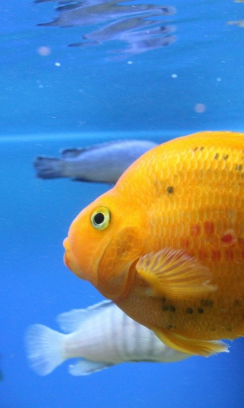 Fish Swim Beautiful           X