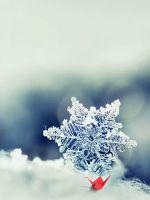Snowflake Closeup IPhone   Plus Wallpaper Ilikewallpaper Com